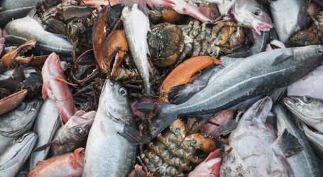 Should we be able to see what bycatch is caught in our oceans?