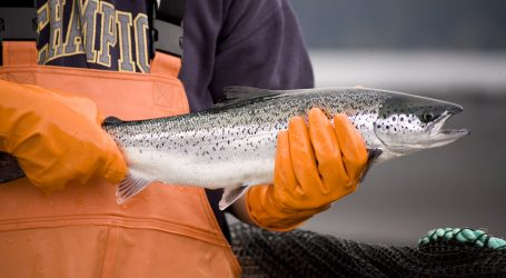 Why the world needs more aquaculture