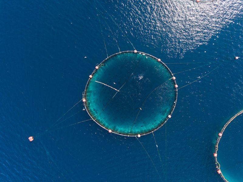 land based fish farming