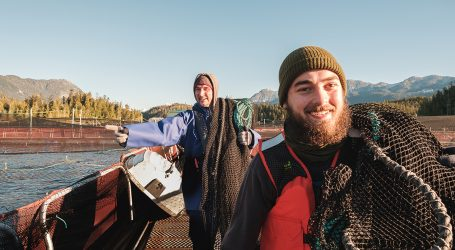 Employees help Cermaq achieve new salmon milestone