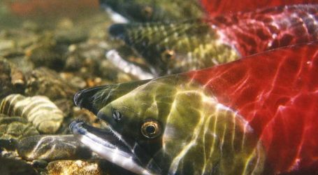 Plenty of fish in Pacific Northwest says new study