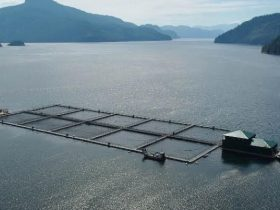First Nations salmon farms