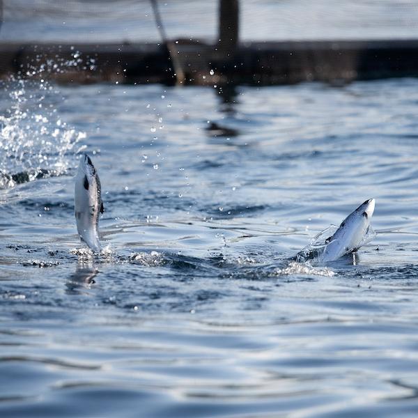 anti fish farms treaty claims