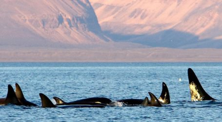 What ails our killer whales