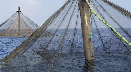 Ocean to Table video series demystifies farmed seafood