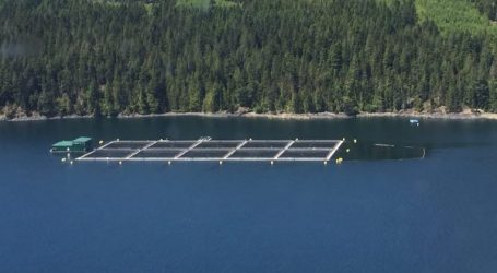 Career opportunities in salmon farming, Canada