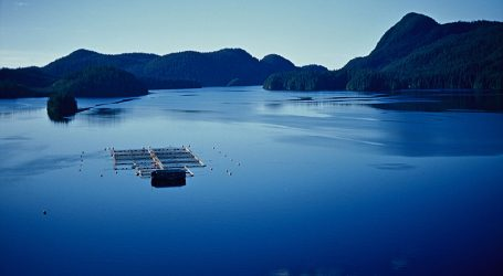 Fish farms carbon footprint among lowest affirms study