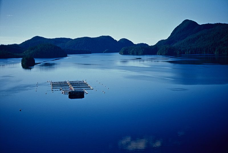 Canadian Agricultural Federation joins growing chorus of support for BC salmon farmers and urges government to review Discovery Islands aquaculture ban