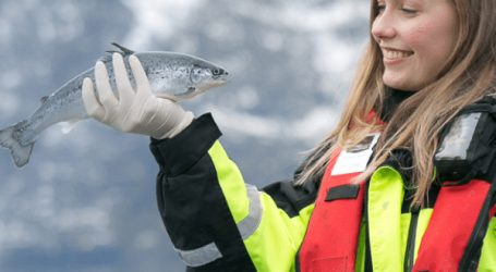 Salmon farming is a good bet for your investment dollars