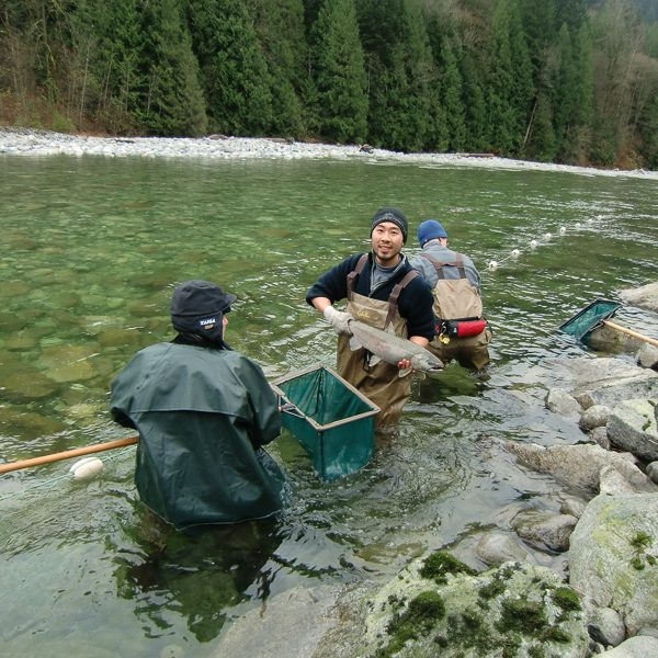 British Columbia salmon fund