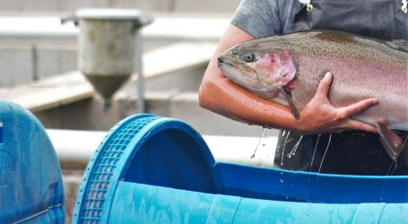 Ontario provides a healthy climate for fish farms