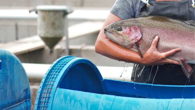 Ontario provides a healthy climate for fish farms - SeaWestNews