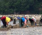 """""""Women in Seafood"""" video competition: A great success of the third edition"""