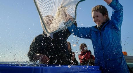 Cooke makes a fish farming comeback in Washington waters