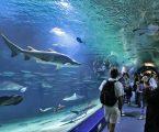 Seafood champs stir the pot to help Vancouver Aquarium