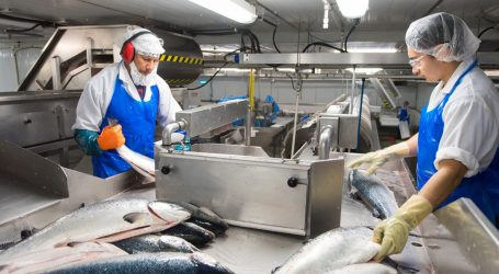 Canada pumps millions into seafood sector to keep it safe