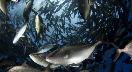 US ramping up seafood security with aquaculture