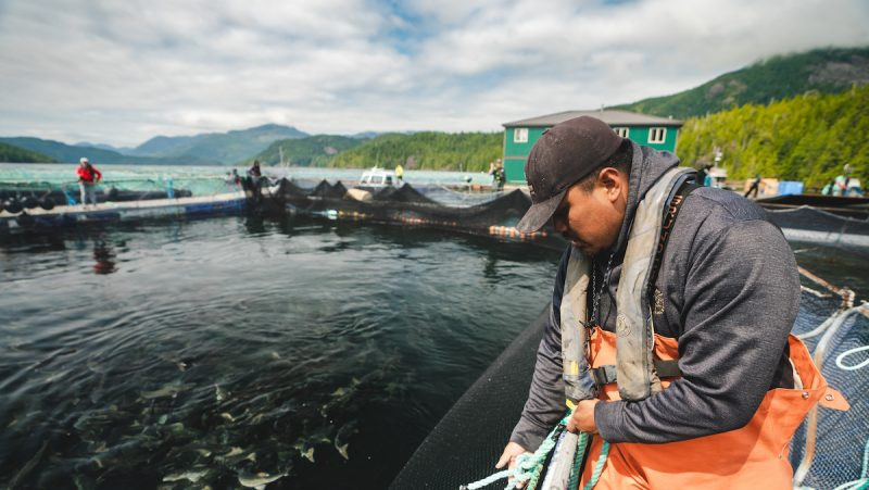 Sustainable aquaculture in Canada