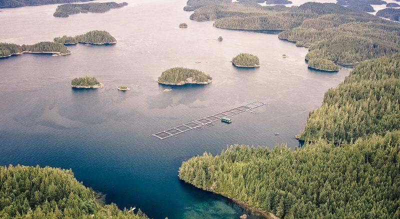 anti-fish farm activist