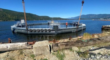 BC salmon farmers to invest millions in aquaculture projects