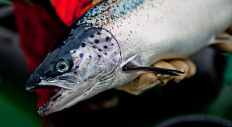Salmon farmers want your input for a better output