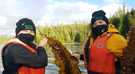 Seaweed farming, especially near ocean aquaculture sites, can help B.C be a low-carbon producer of choice for seafood, milk, and beef.
