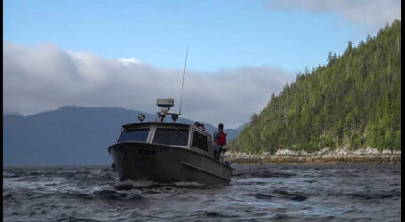 Spies and lies in anti-salmon farm activist's book