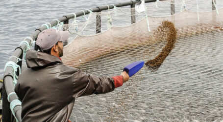 Maintaining aquaculture growth will require responsive and effective governance states UN food agency and the OECD