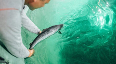 Atlantic Sapphire's aquaculture woes is a cautionary tale