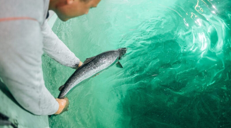 Financial woes and setbacks at Atlantic Sapphire, the largest global onshore aquaculture company in the world, show the technology to replace ocean-based salmon farms to land based operations on a large scale is years away.