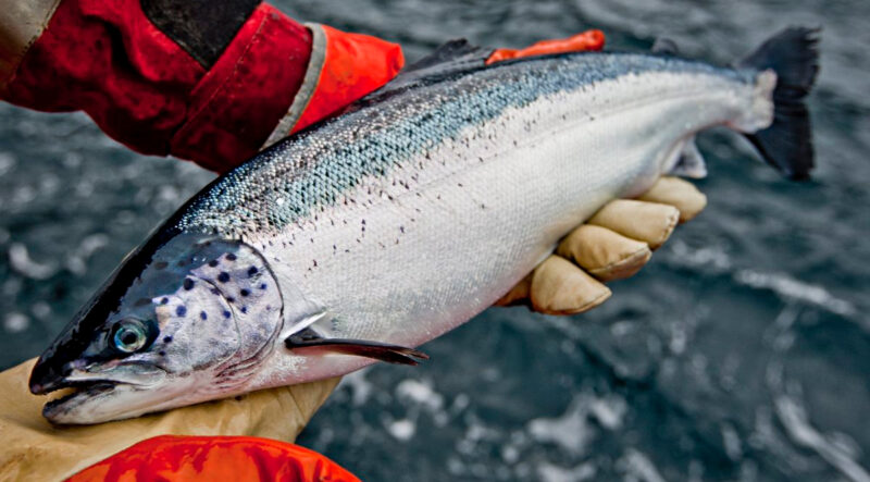 Salmon producer Cermaq sets binding climate goals for its aquaculture operations to cut greenhouse gas emissions while ensuring food security