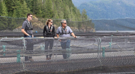 B.C.'s homegrown salmon farming technology is setting the standards around the world, states a new report