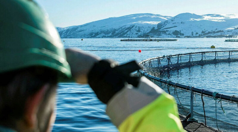 Canada's next Fisheries Minister, the fifth in just six years, needs to think outside the box for the sustainable growth of aquaculture